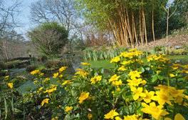 RHS Garden Rosemoor, Devon (Spring) (c)RHS,Brian Chapple