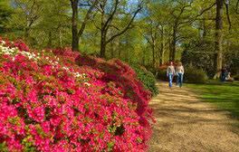 Richmond Park London (c) VisitEngland