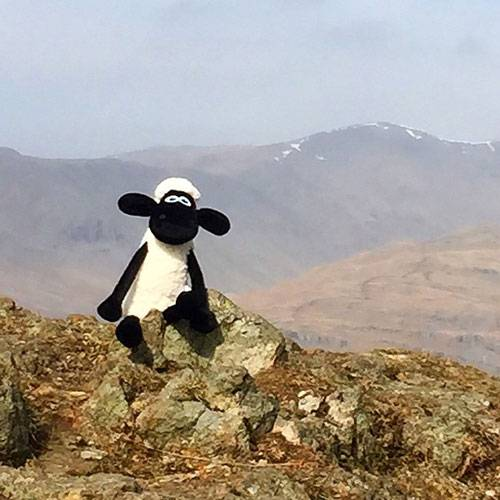 Shaun the Sheep at the top of Wansfell in Cumbria