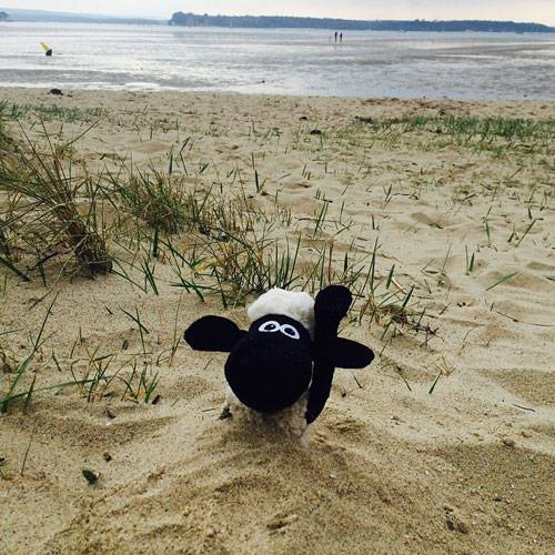 Shaun the Sheep buried in sand at the beach in Sandbanks