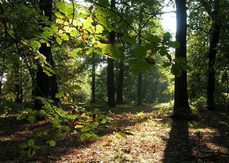 Sherwood Forest, Nottinghamshire
