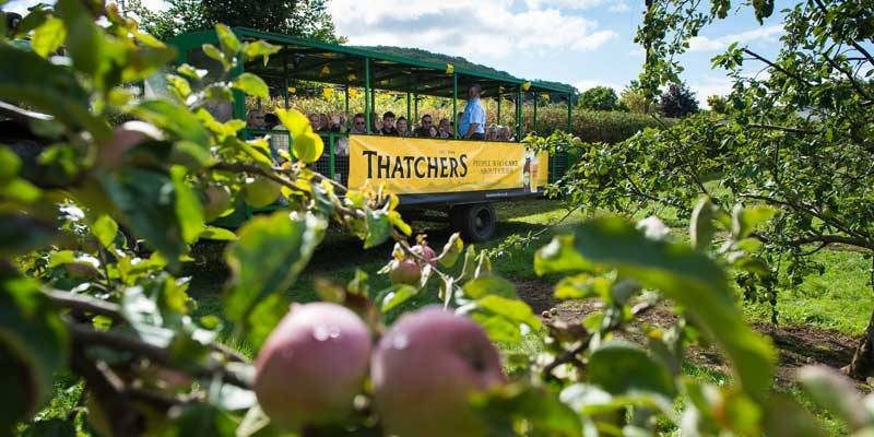 Thatchers Open Day