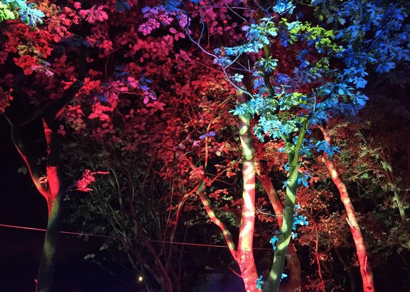 Magical Woodland, Sandiway, Cheshire