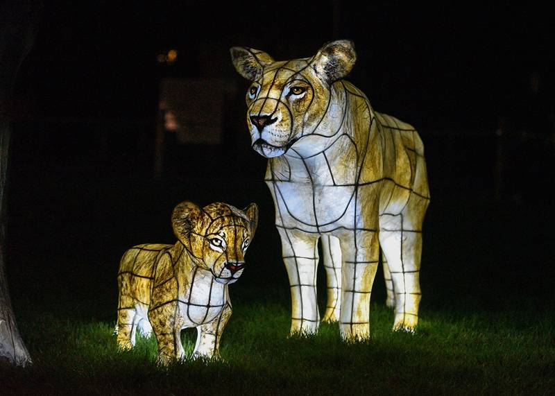 The Lanterns at Chester Zoo