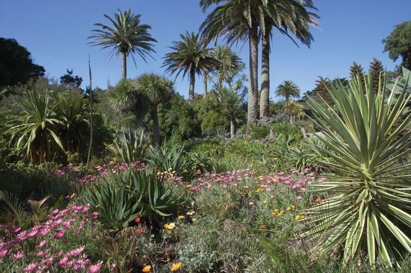 Green palm trees and exotic plants sit against a bright blue sky