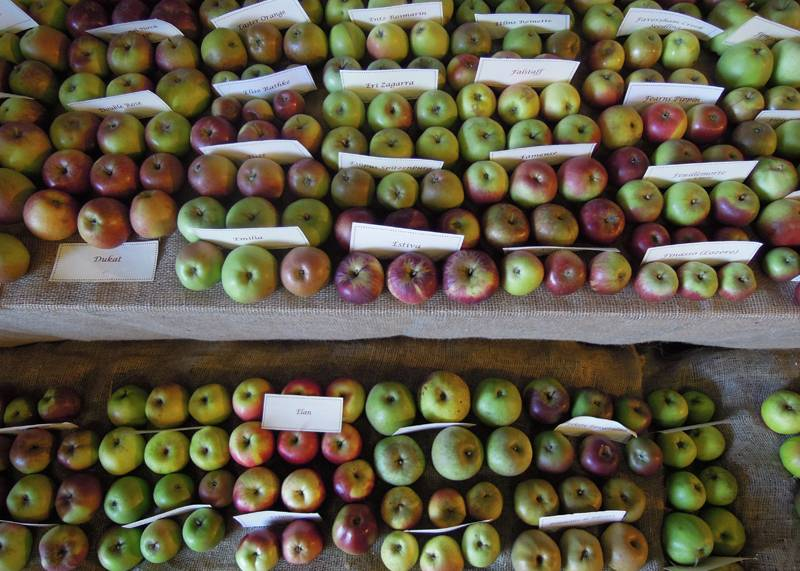 National Apple Festival, Kent