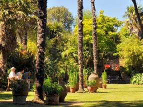 Palms trees and emerald green lawns at Abbotsbury Subtropical Gardens