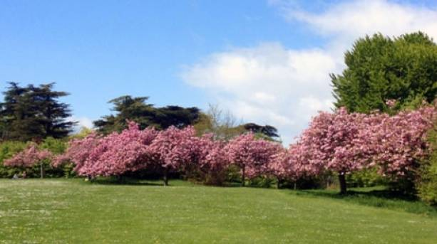 Trees in blossom at Stanmer park, near Brighton.