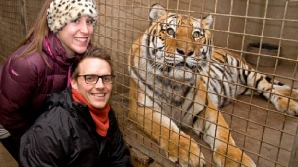 Hang out with the Big Cats