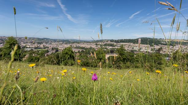 Wild flower meadows with the city of Bath in the background