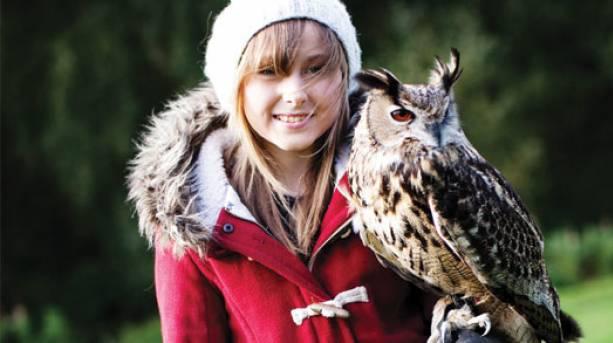Cheshire Falconry, Cheshire
