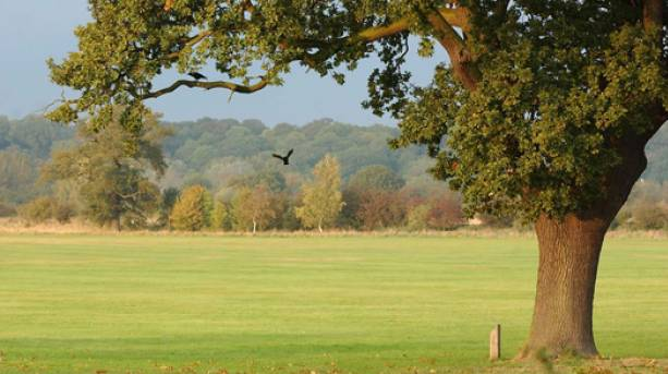 Wildlife abounds across forest field and riverbank in Cambridgeshire