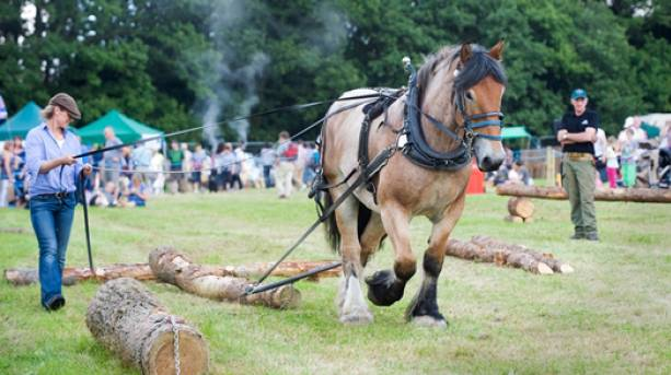 The National Forest & Beyond - National Forest Wood Fair Horse Logging