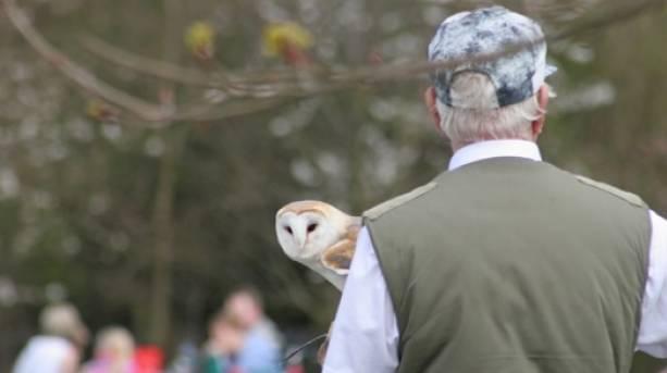 The National Forest & Beyond - Owl over shoulder