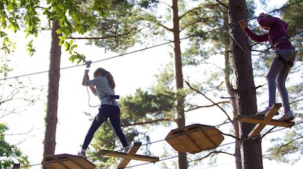 Go Ape in Thetford Forest