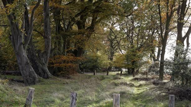 Ashridge Estate, Hertfordshire
