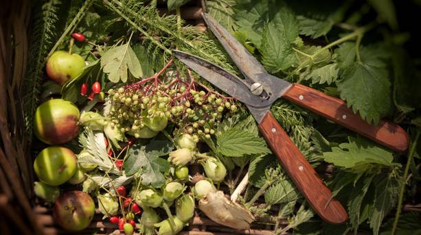 Food foraging in Suffolk