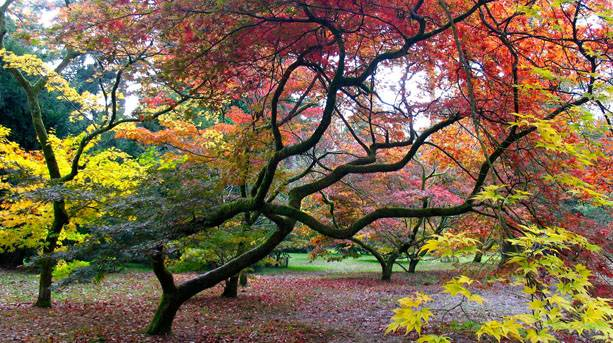 Autumn trees at Westonbirt