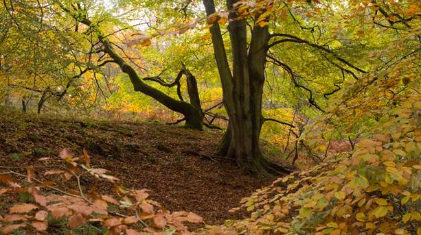 autumn walks in the forest of dean visitengland