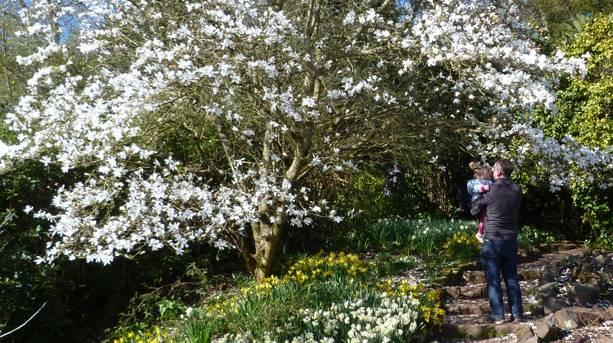 Killerton Gardens in Spring