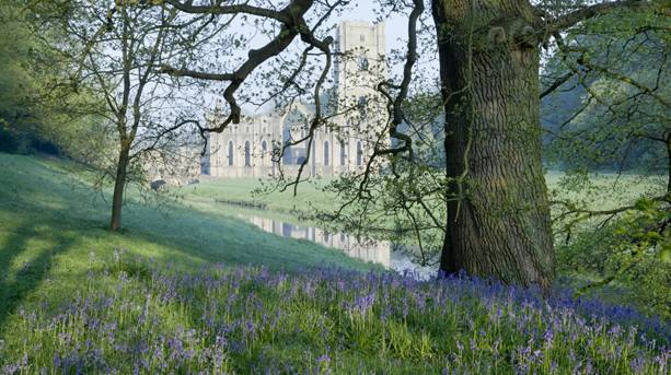 Bluebells at Fountains Abbey