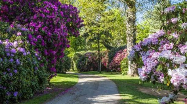 Bowood Rhododendron Gardens