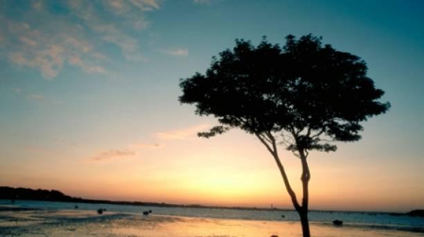 Sunset on Brownsea Island