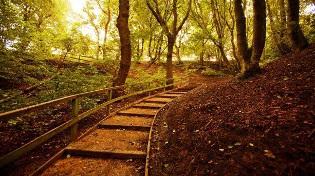 Exploring woodlands