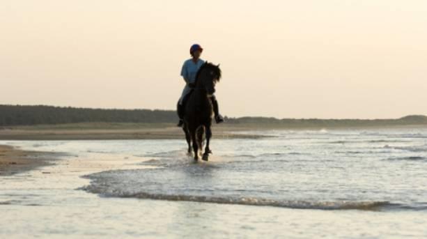 A horse on the beach at Burnham-on-Sea