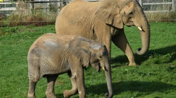 Elephants at Noah's Ark Zoo Farm