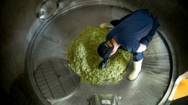 Brewing at Castle Rock Brewery