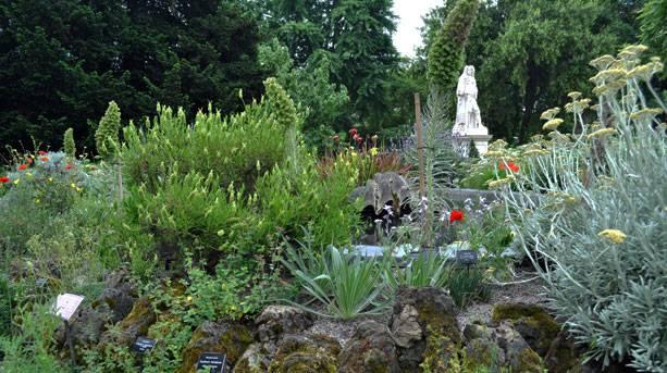 Inside Chelsea Physic Garden