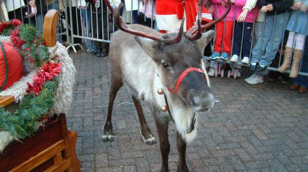 Reindeer at Christmas shopping events in Eastbourne