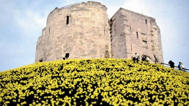 Daffodils around the tower