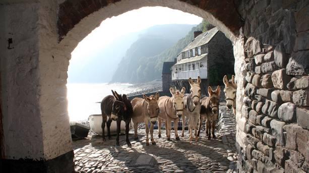 Donkeys of Clovelly