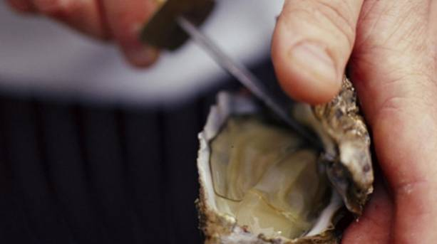 Opening an oyster