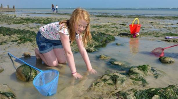 A little girl rock pooling in Eastbourne