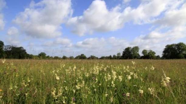 Cricklade's North Meadow