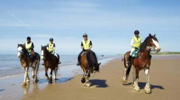 Cumbrian Heavy Horses