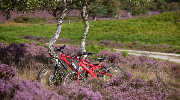 Two bikes against a tree in Suffolk