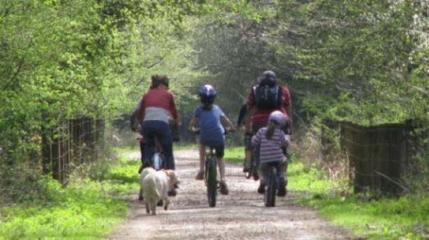 Family cycling in the Forest of Dean