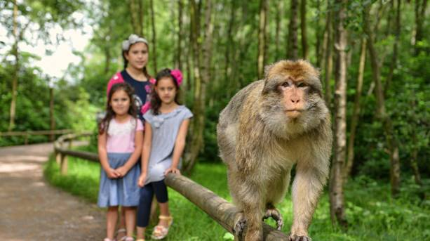 A group of kids at Trentham Monkey Forest