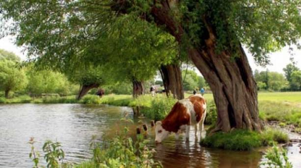 The Dedham Vale, an Area of Outstanding Natural Beauty