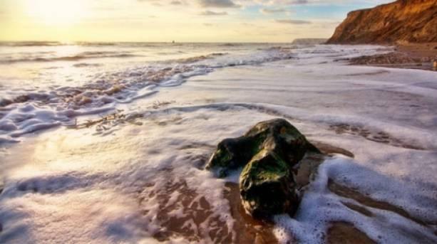 Dinosaur Footprint at Brook Beach, Isle of Wight