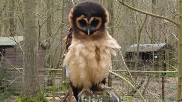 Owl Rutland Falconry Centre