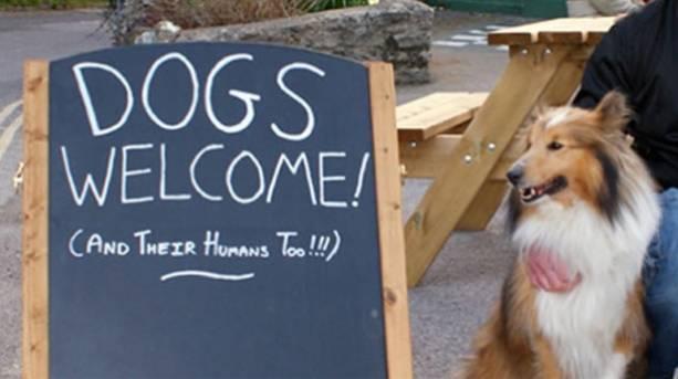A dog outside dog friendly pub Castle Inn in Dorset