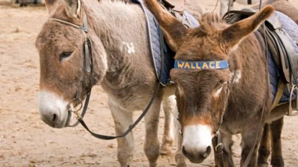 Donkeys on Weston-super-Mare beach