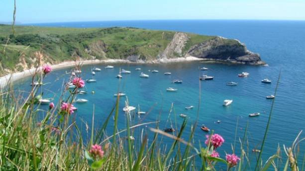 Flowers blossoming on Lulworth Cove in Dorset