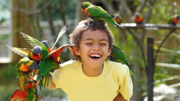 A young boy feeding the Lorikeets at Drusillas Park