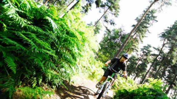 Cannock Chase Forest offers miles of exhilarating mountain bike trails for all levels & abiltiies